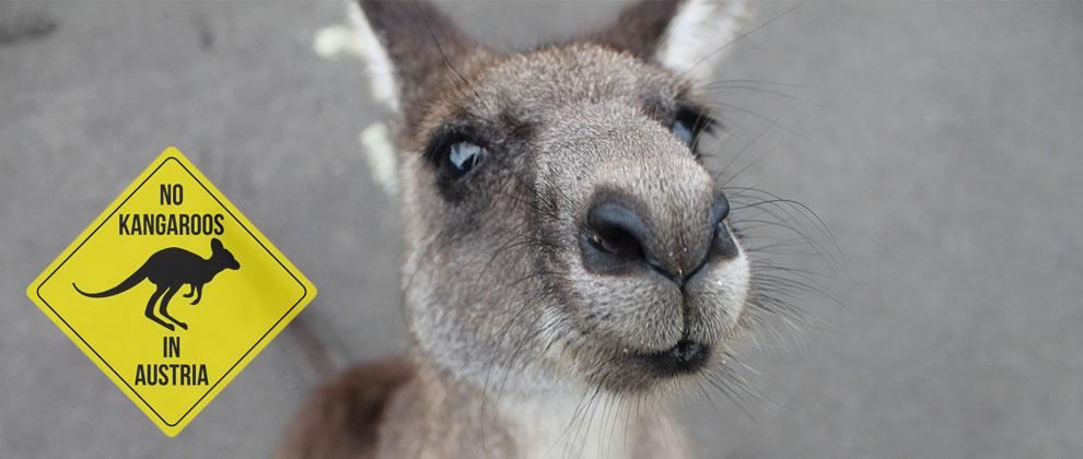 Avstrija in kenguruji